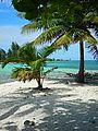 utila, honduras, water cay, beach, island
