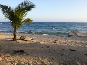 utila-honduras-vacations-coral-beach (1)